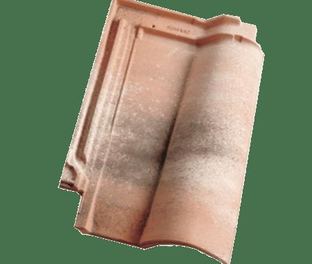 Romane 11